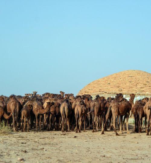 animals-iran-qom-province-3037178